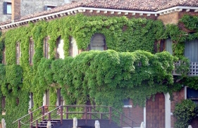 Hanging Garden On A House